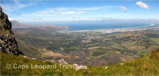 Cape Leopard Trust CLT